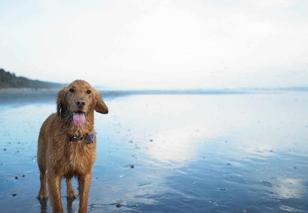 Dog Friendly Cottages In Tenby