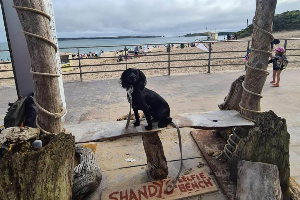 Dog friendly pubs in Tenby